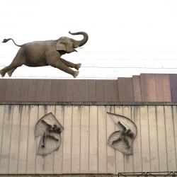 w-elephant-voie-ferree