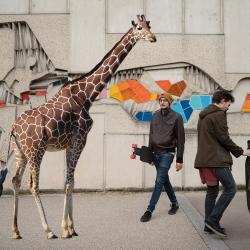 w-girafe