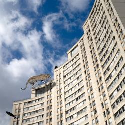 w-leopard-immeuble