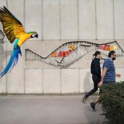 w-perroquet
